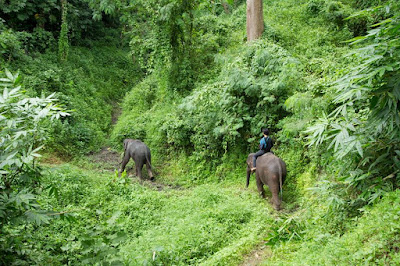 Chiang Mai tour packages for 2 days Fauna and Natural world