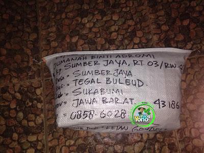 Benih Padi Pesanan  Mang Endye Sukabumi, Jabar.  Benih Sesudah di Packing