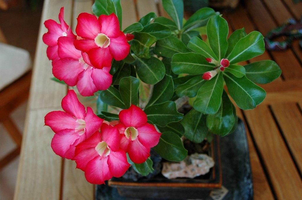 Floraciones en m laga y m s floraciones de agosto for Planta ornamental que se reproduzca por esquejes