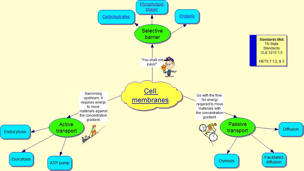 Tech Savvy Reynolds Cell Membrane Diagram Created With Inspiration
