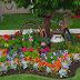 Aprenda cómo tener sus plantas y flores con abono orgánico ecológico