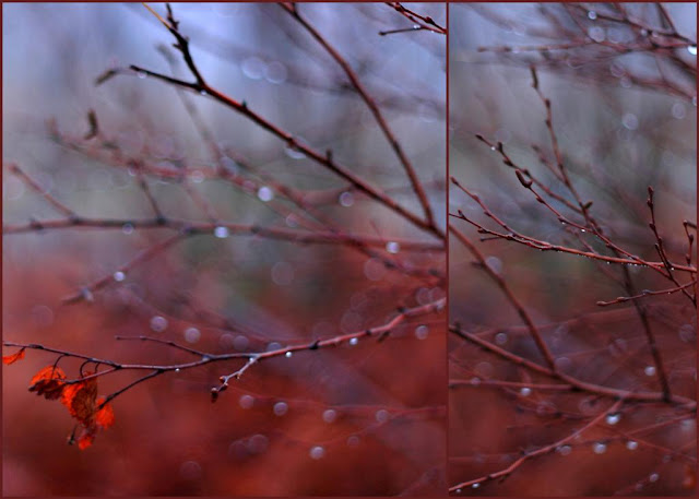 tree branches and sparkling raindrops