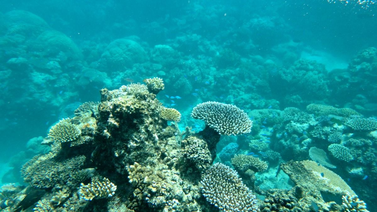 Weekend Escape To The Great Barrier Reef Queensland