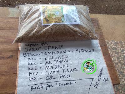 Benih pesana    JAROT EFENDI Madiun, Jatim  (Sebelum Packing)