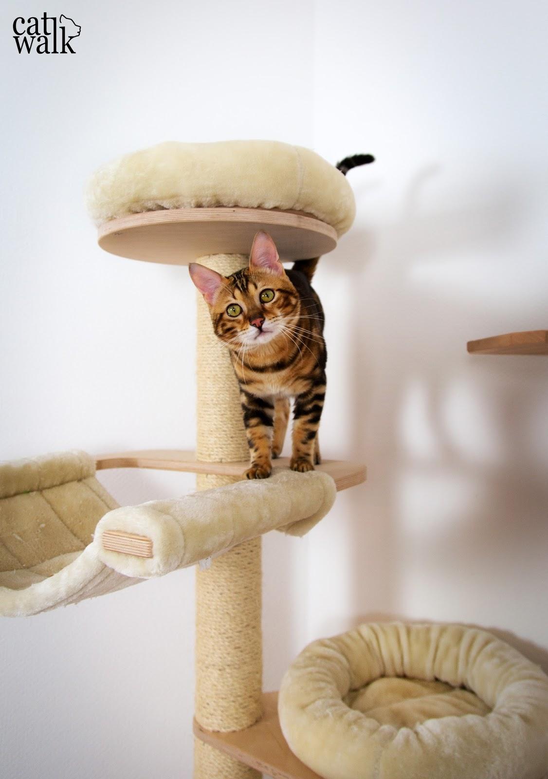 amely rose diy kletterwand f r katzen ein catwalk f r cat walk. Black Bedroom Furniture Sets. Home Design Ideas