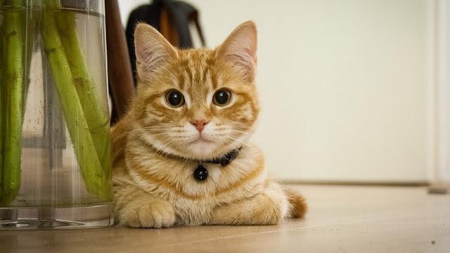 Bersyukurlah Jika Punya Kucing! Ini Rahasia Besarnya Menurut Islam & Medis