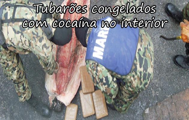 COCAÍNA TUBARÃO