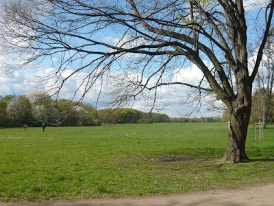 Eine große Wiese, auf der im Vordergrund ein Baum steht