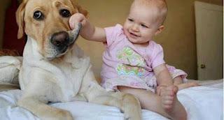 Çocuklu Evde Evcil Hayvan Beslemek Doğrumudur ?