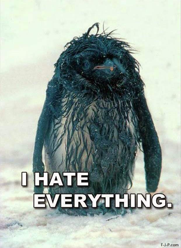 Funny I Hate Everything Miserable Penguin Joke Picture