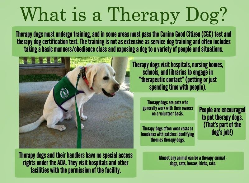 Dog Training To Become A Therapy Dog