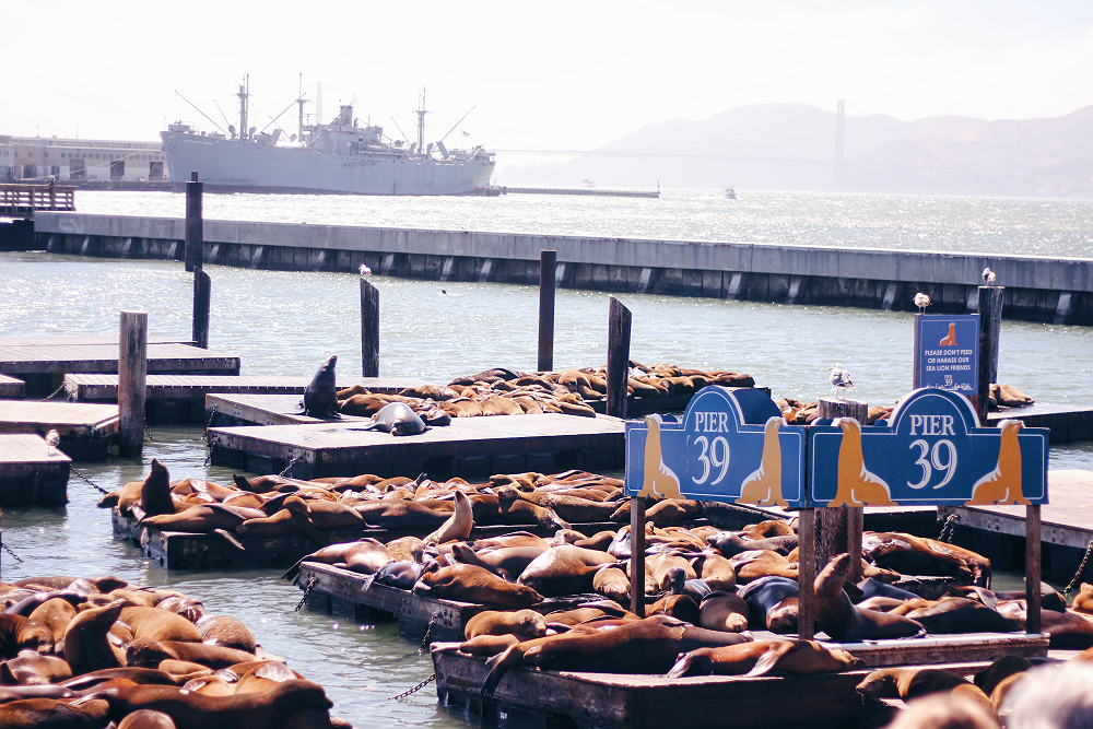 places to visit in san francisco pier 39
