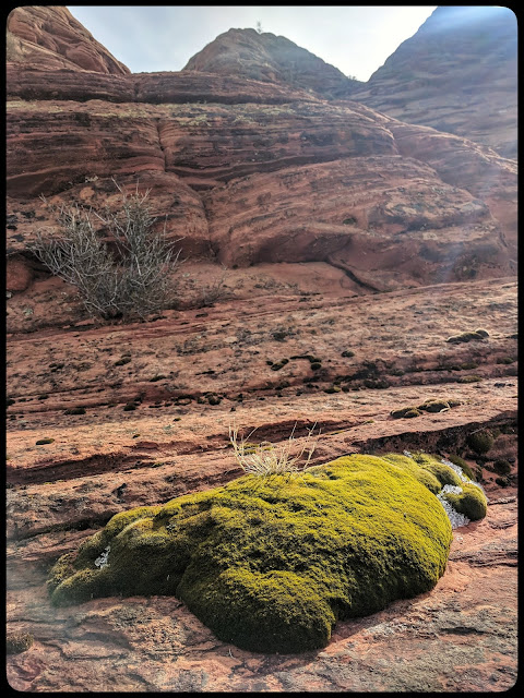 Cool Green Moss growing in the Winter on this Dark Red Rocks - Cool Contrast
