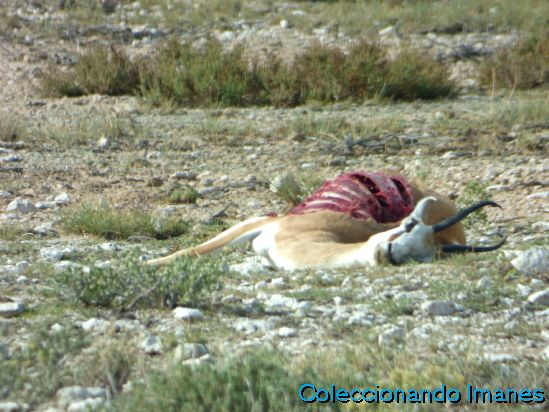 Animal muerto en Etosha