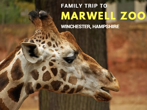 Marwell Zoo Winchester Hampshire
