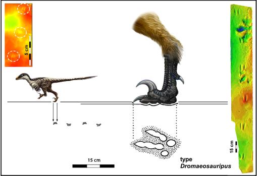 Resultado de imagen para Dromaeosauriformipes rarus