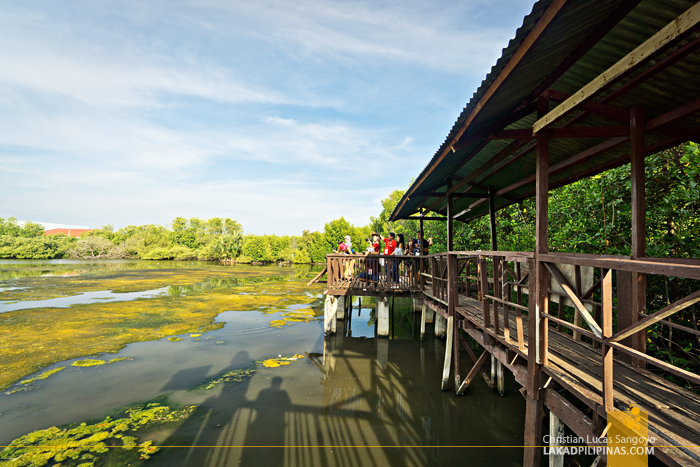 What to See in Zamboanga City ZSCMST Bird Sanctuary