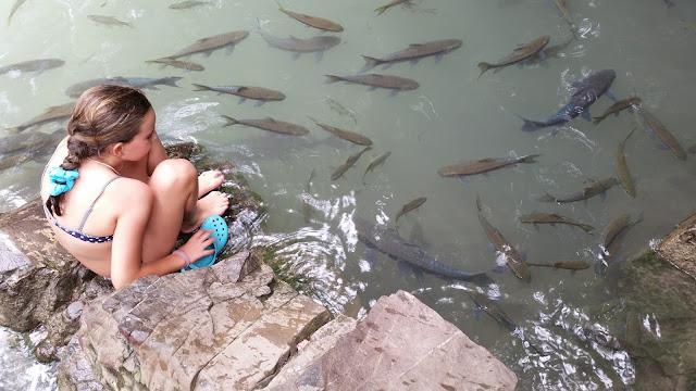 Peces en las Cascadas Erawan