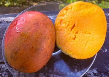 Turpentine mango madness | Thoughts of a minibus traveller