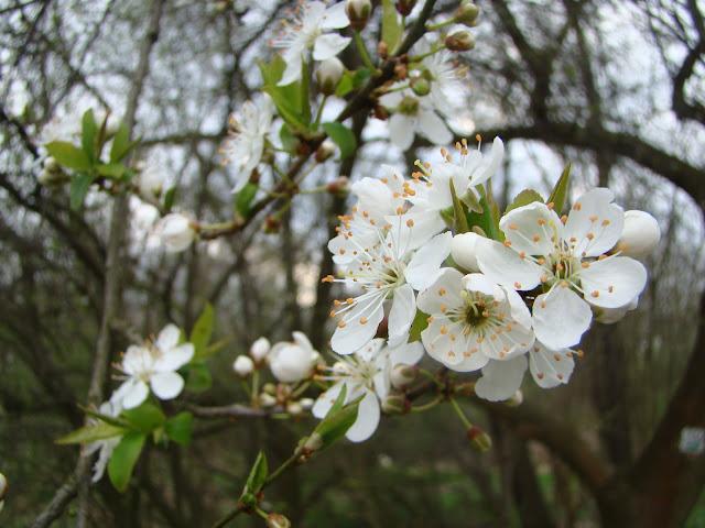 Pierwsze wiosenne zdjęcia