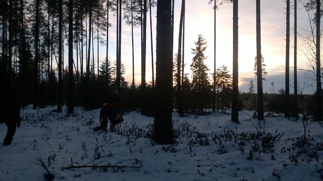 joulukuusen hakumatka hämärä metsä