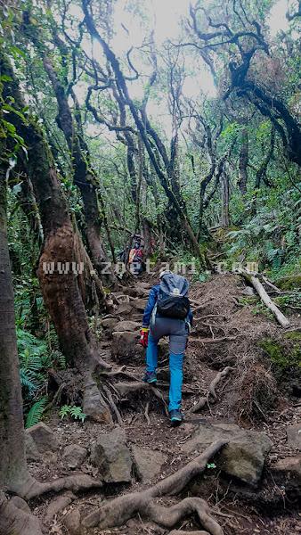 Info Pendakian Gunung Gede via Jalur Cibodas