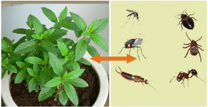 This Plant Is A God Blessing, It Hunts Mice, Spiders And Other Insects From Your Home