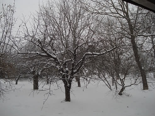 Winter in my garden by Laka kuharica: a poem by I.G. Kovačić