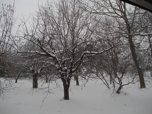 Winter in my garden by Laka kuharica: a poem by I.G. Kovačić