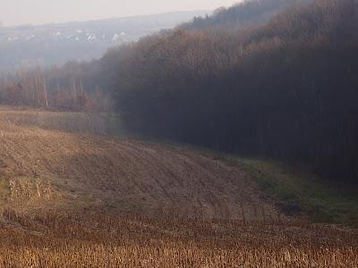 las-w-bosutowie