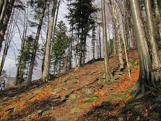 Zejście niebieskim szlakiem do doliny Łomniczanki