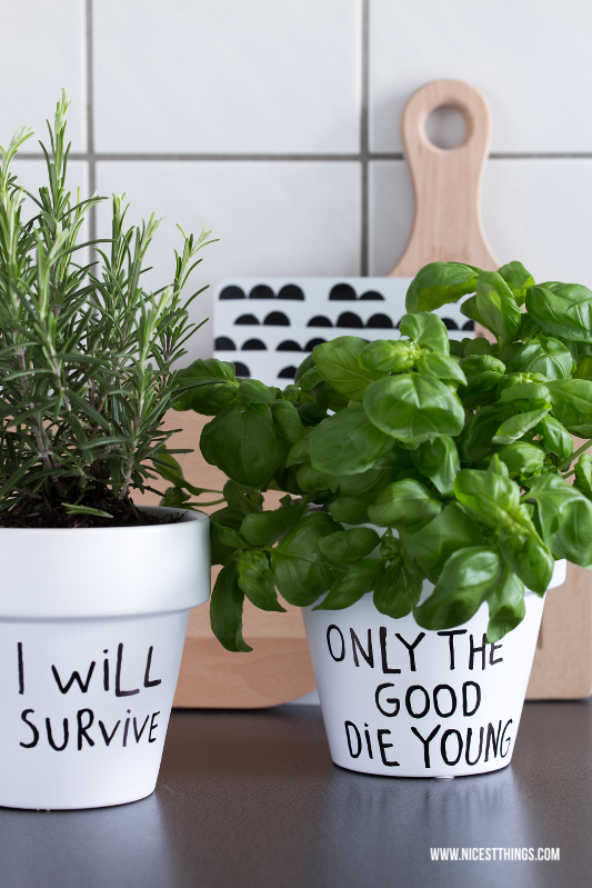 Funny Planters For Kitchen Herbs