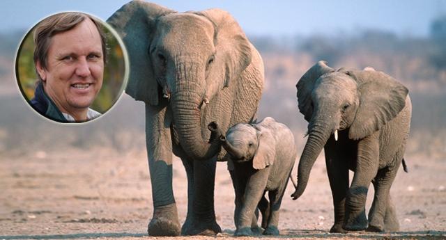 Asesinan a Wayne Lotter el mayor defensor de los elefantes del mundo