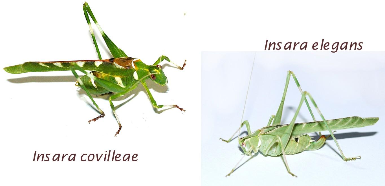 small resolution of katydid life cycle diagram photo 18