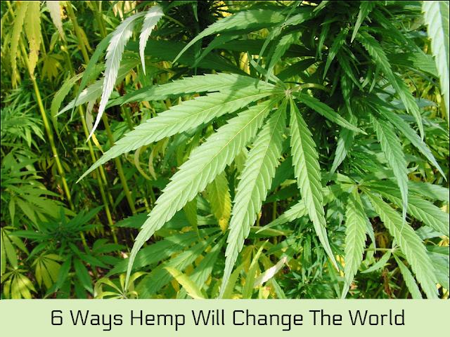 6 Ways Hemp Will Change The World