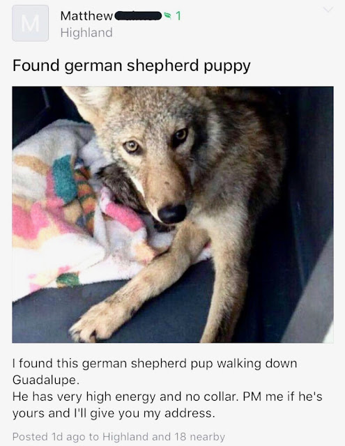 Found a german shepherd puppy . . . that's not a german shepherd. Nextdoor App Hilarious Post marchmatron.com