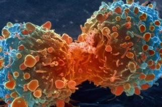 कैंसर जैसी घातक बीमारी