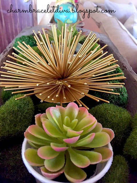 Succulent and Target Sea Urchin display