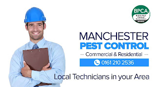 Rat Control Manchester