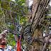 AMAZONAS LIDERAM 'GATOS'. DESVIO DE ENERGIA DARIA PRA ABASTECER SC DURANTE UM ANO.