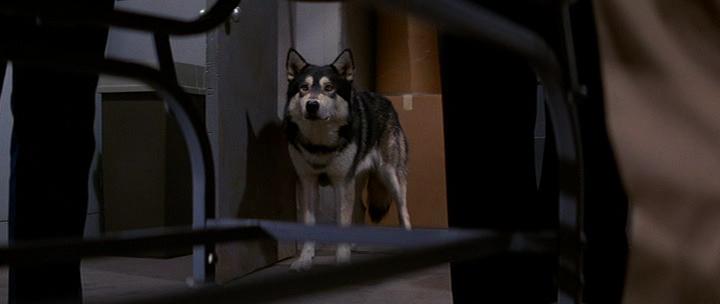 IMAGE(http://4.bp.blogspot.com/-d2-IB2X0_BA/UJLMa5sy9DI/AAAAAAAAB_A/xeZ4rtohWIA/s1600/the-thing-dog.png)