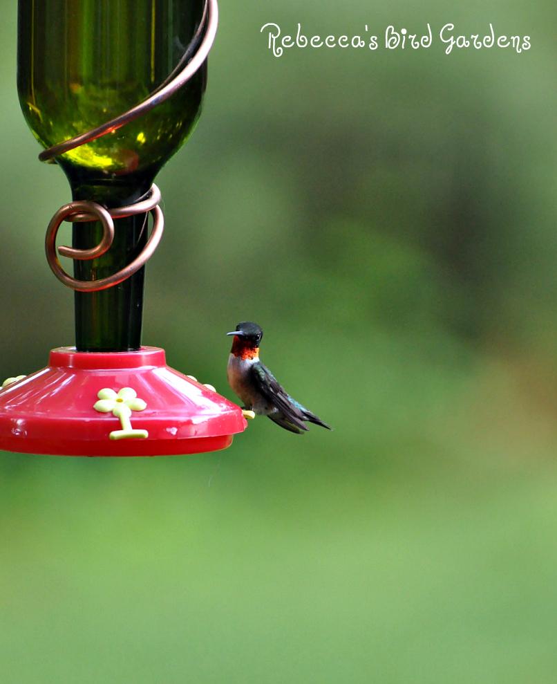 Rebecca S Bird Gardens Blog Wine Bottle Bird Feeders