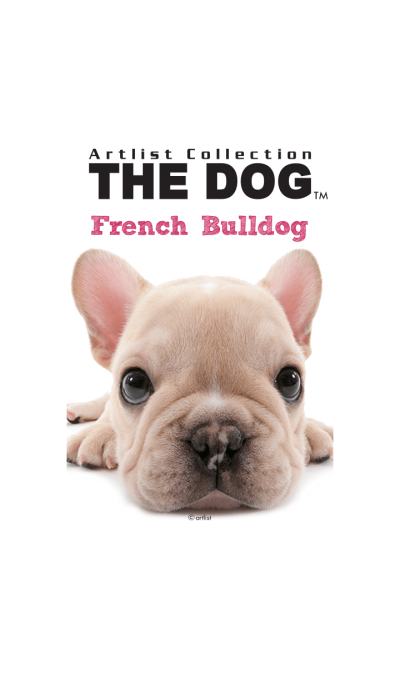 THE DOG French Bulldog
