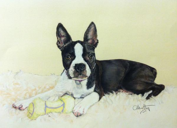 Pastel Pet Portrait of a Boston Terrier.
