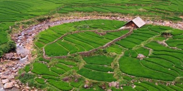 Abdya Cetak Sawah Baru 1.000 Hektar
