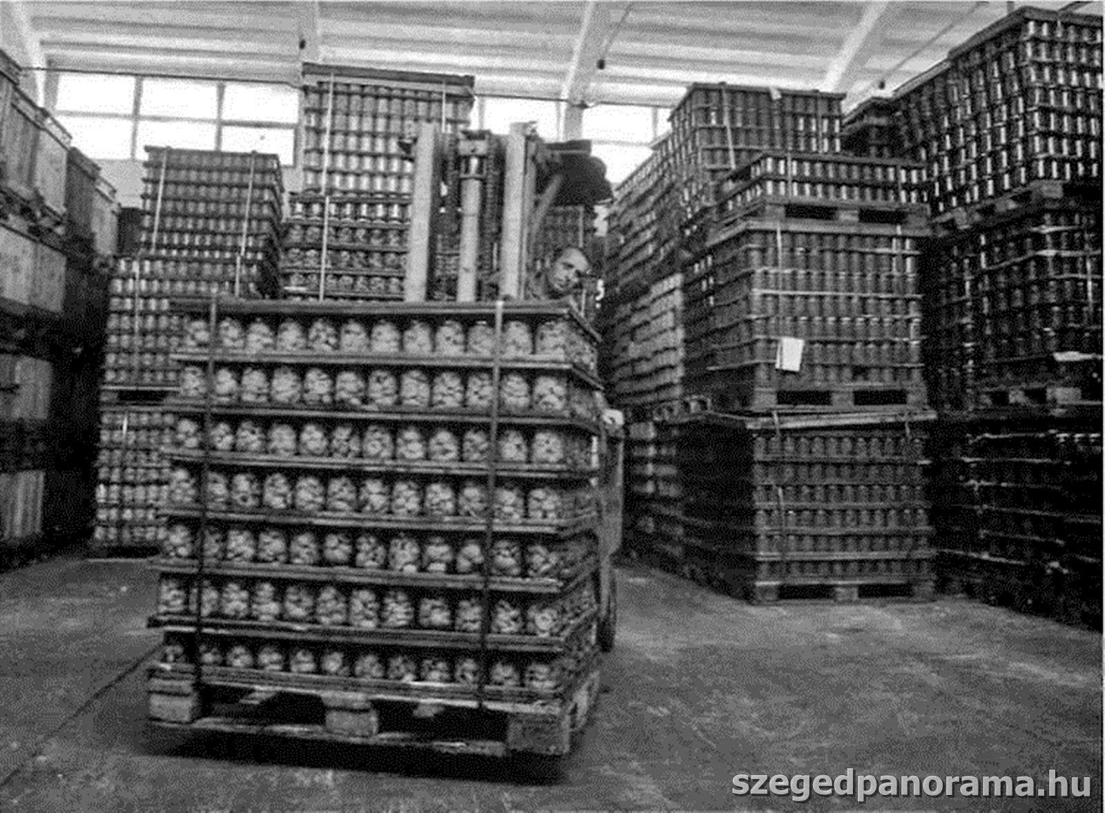 Gyufagyártó üzem