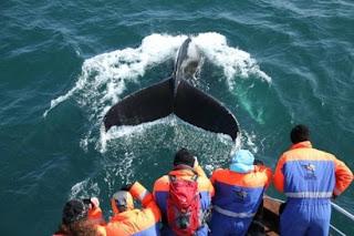 Journal de Voyage – Le Circuit de 12 jours en Islande de Diane
