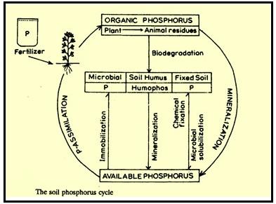 Biologi Gonzaga Daur Phospor