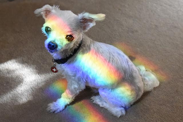 Rainbow dog, LGBTQI veterinarians
