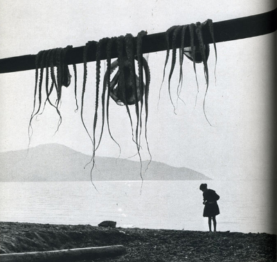 http://the-night-picture-collector.tumblr.com/post/160978444736/hiroshi-watanabe-octopus